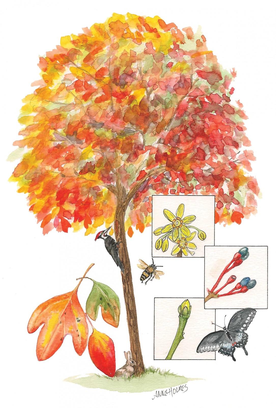 In Bloom: Sassafrass