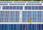 Sustainability: Wildlife and Solar Energy